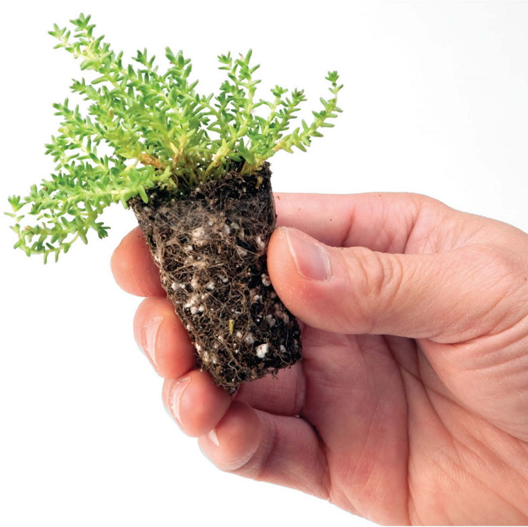 Vegetation Options For Extensive Roofs Hydrotech