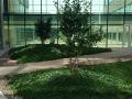 CHUSJ Courtyard Level 4, photo credit NIP Paysage